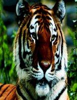 Chuyên đề : Bảo vệ động vật hoang dã