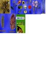 hình ảnh về các nhóm thực vật