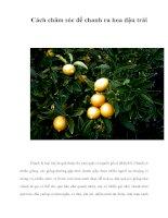 Cách chăm sóc để chanh ra hoa đậu trái