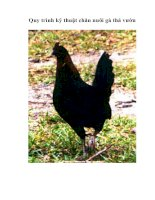 Quy trình kỹ thuật chăn nuôi gà thả vườn