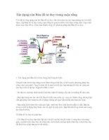 Tác dụng của bản đồ tư duy trong cuộc sống