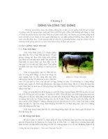 Giáo trình Chăn nuôi trâu bò - Chương 2