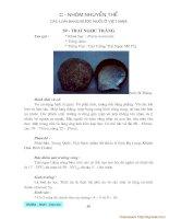 Danh mục các loại thủy sản nước lợ và nước mặn VN - Phần 3