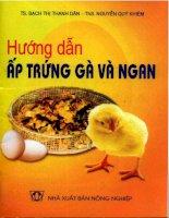 Kĩ thuật ấp trứng gà và ngan