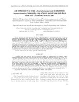 ẢNH HƯỞNG CỦA TỶ LỆ CỎ VOI (Pennisetum purpureum) VÀ RAU MUỐNG (Ipomoea aquatica) TRONG KHẨU PHẦN ĐẾN HIỆU QUẢ SỬ DỤNG THỨC ĂN VÀ NĂNG SUẤT CỦA THỎ THỊT NEW ZEALAND