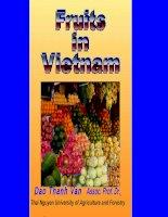 Tài nguyên cây ăn quả ở Việt nam