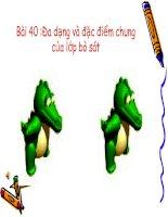 Bài 40 :Đa dạng và đặc điểm chung của lớp bò sát
