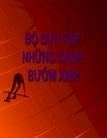 BO SUU TAP NHUNG CANH BUOM XINH