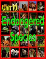 Unit 10: Endangered species