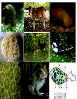 Bài 45: Sinh sản hữu tính ở động vật