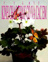 Bài Cảm ứng ở thực vật-CB