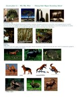 Handout - Unit 9: Speaking - Pictures of trees and animals
