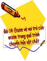 bài 14: enzim và vai trò của enzim trong quá trình chuyển hóa vật chất
