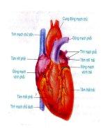 Tiết 17.Tim và mạch maú