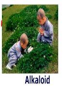 báo cáo hợp chất thiên  nhiên 2