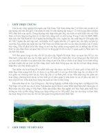 BÁo cáo tổng hợp Diễn đàn về phát triển chè bền vững ở Việt namx