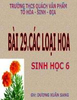 BÀI 29 - CÁC LOẠI HOA