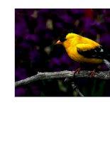 Bộ sưu tập ảnh về một số loài chim