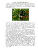 Nhà sàn Bác Hồ: Bài học về sự giản dị, tiết kiệm