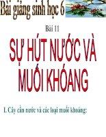 BÀI 11 SỰ HÚT NƯỚC VÀ MK
