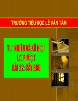TNXH1 _ bài 22 _ Cây rau