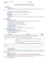 Bài 13: Cấu tạo ngoài của thân (sơ đồ KWL)