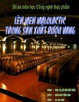 Lên men Malolactic trong sản xuất rượu vang