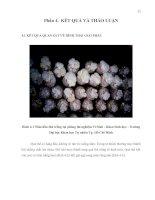 KHẢO SÁT KHẢ NĂNG SỬ DỤNG NGUỒN CƠ  CHẤT QUEN THUỘC (MẠT CƯA, BÃ MÍA, RƠM) ĐỂ TRỒNG NẤM HẦU THỦ HERICIUM ERINACEUM (Phần 4. Kết quả)