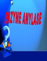Bài thuyết trình về enzyme amilase