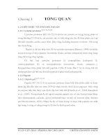Tổng quan thành phần hóa học của cây kim thất lá tô mách