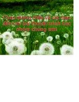 Đề tài TÌM HIỂU VỀ HỒ QUANG ĐIỆN 1 CHIỀU CÁCH DẬP TẮT VÀ ẢNH HƯỞNG CỦA NÓ