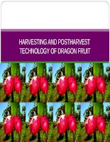 Harvesting and Post Harvest Technology of Dragon Fruit