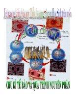 Chu kỳ tế bào và quá trình nguyên phân