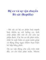 Hệ cơ và sự vận chuyển Bò sát (Reptilia)