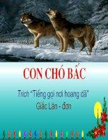 con chó bấc- Nguyễn Thị Thiềm