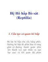 Hệ Hô hấp Bò sát (Reptilia)