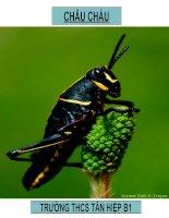 bài 27 Đa dạng đặc điểm chung của lớp sâu bọ.anhthu