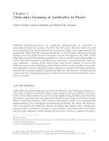 Molecular Farming of Antibodies in Plants