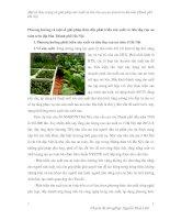 Phương hướng và một số giải pháp thúc đẩy phát triển sản xuất và tiêu thụ rau an toàn trên địa bàn Thành phố Hà Nội
