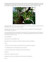 10 loại cây củng cố phong thủy nhà bạn