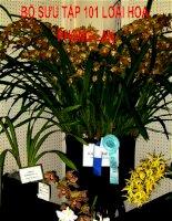 Bộ sưu tập 101 hoa Phong Lan