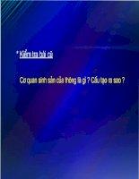Gián án bai giang sinh hoc 6 tiết 41