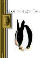 Bài soạn Vì sao thỏ con lạc đường?