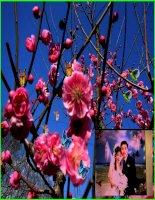 Bài giảng Liên Khúc Xuân - Violet.vn/tiensu76 gửi tặng!