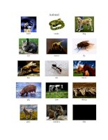 English picture dictionary_ Animal