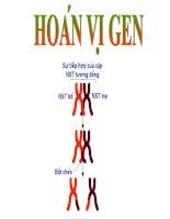 Bài giảng Bài 11. Liên kết gen và hoán vị gen (CB)