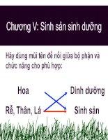 Bài giảng Bai 26: Sinh san sinh duong tu nhien