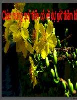 Bài giảng TRACH NHIEM CỦA THANH NIEN TRONG SU NGHIEP CNH - HDH DAT NUOC T2