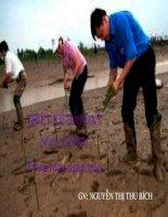 Bài giảng trồng rừng ngập mặn