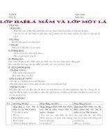 Bài 42 Lớp Hai lá mầm lớp Một lá mầm